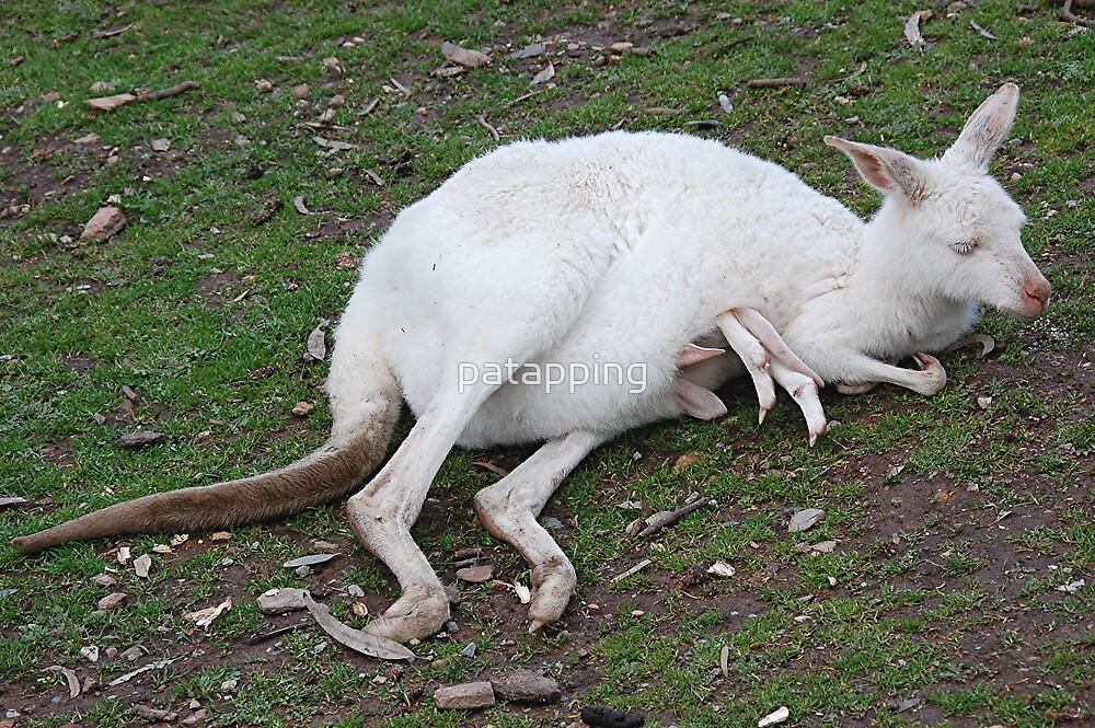 White kangaroo by patapping