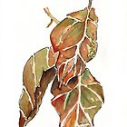 Autumn leaves by Maree Clarkson
