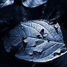 Leaf in Shade by Ben Herman