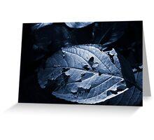 Leaf in Shade Greeting Card