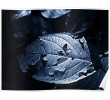 Leaf in Shade Poster