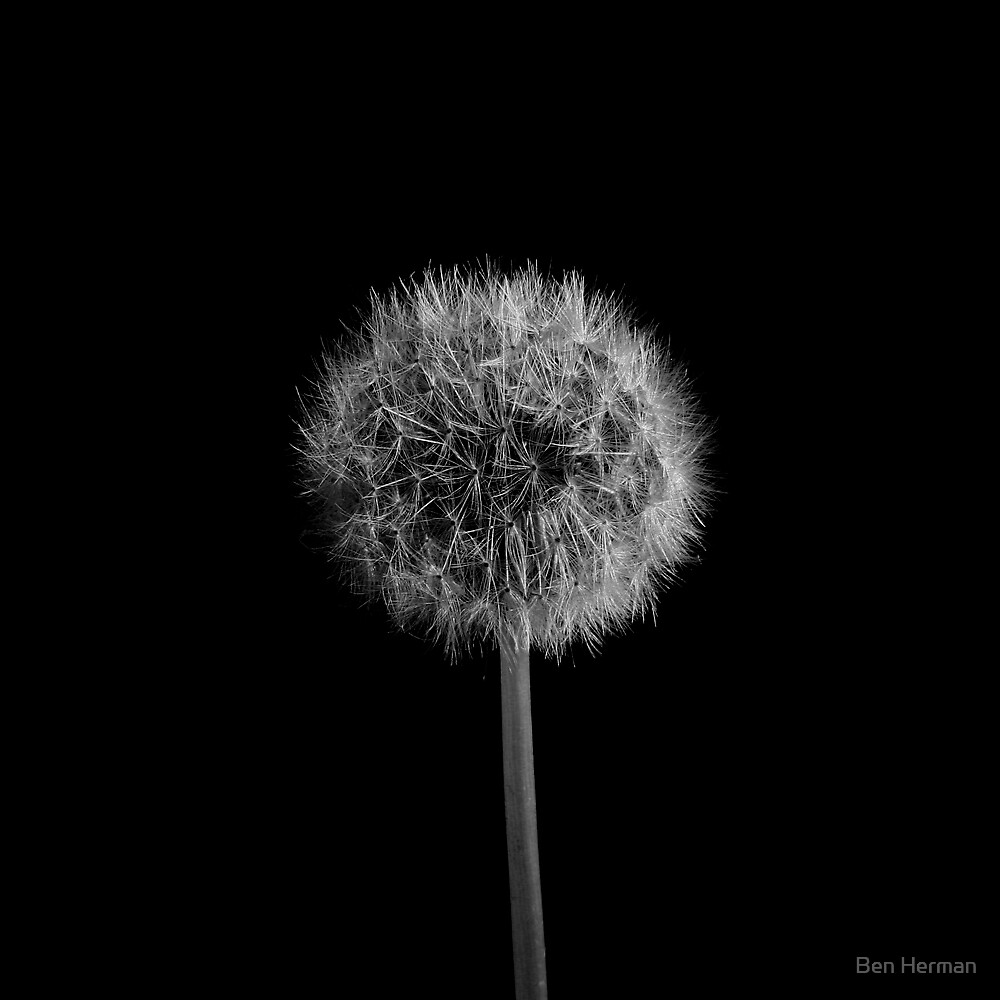 Seed Head by Ben Herman