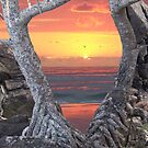 """Sunrise with pandanus frame and caption """"How Much Better Than This Can It Get?"""" by Cathie Sherwood"""