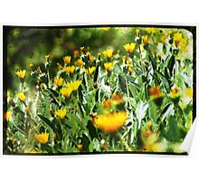 Rustic Flowers Poster