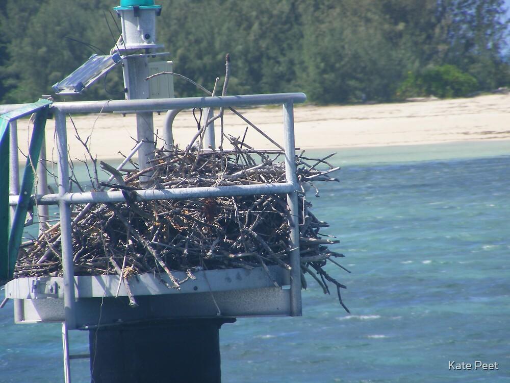 Sea eagle in it's nest by Kate Peet
