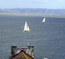 Sail Boats in The SF Bay by nansnana62