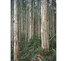 Trees 1 Photographic Print