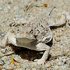 Horned Lizard by Bill Serniuk