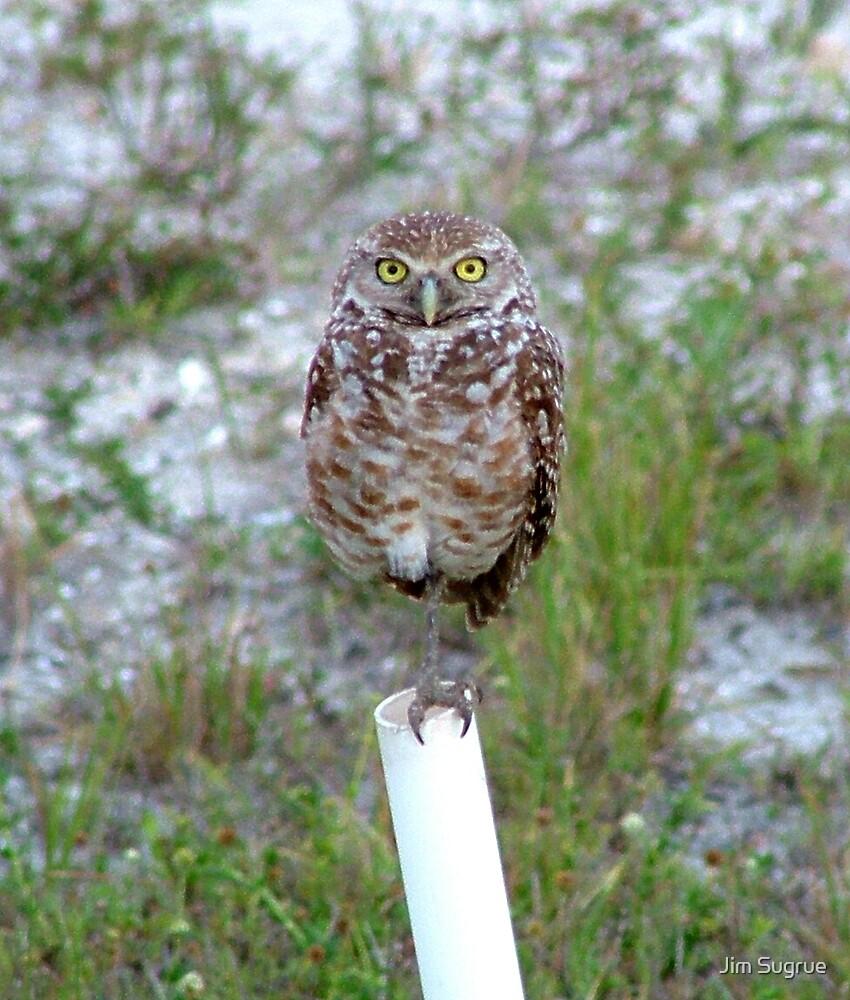 Borrowing Owl 4 by Jim Sugrue