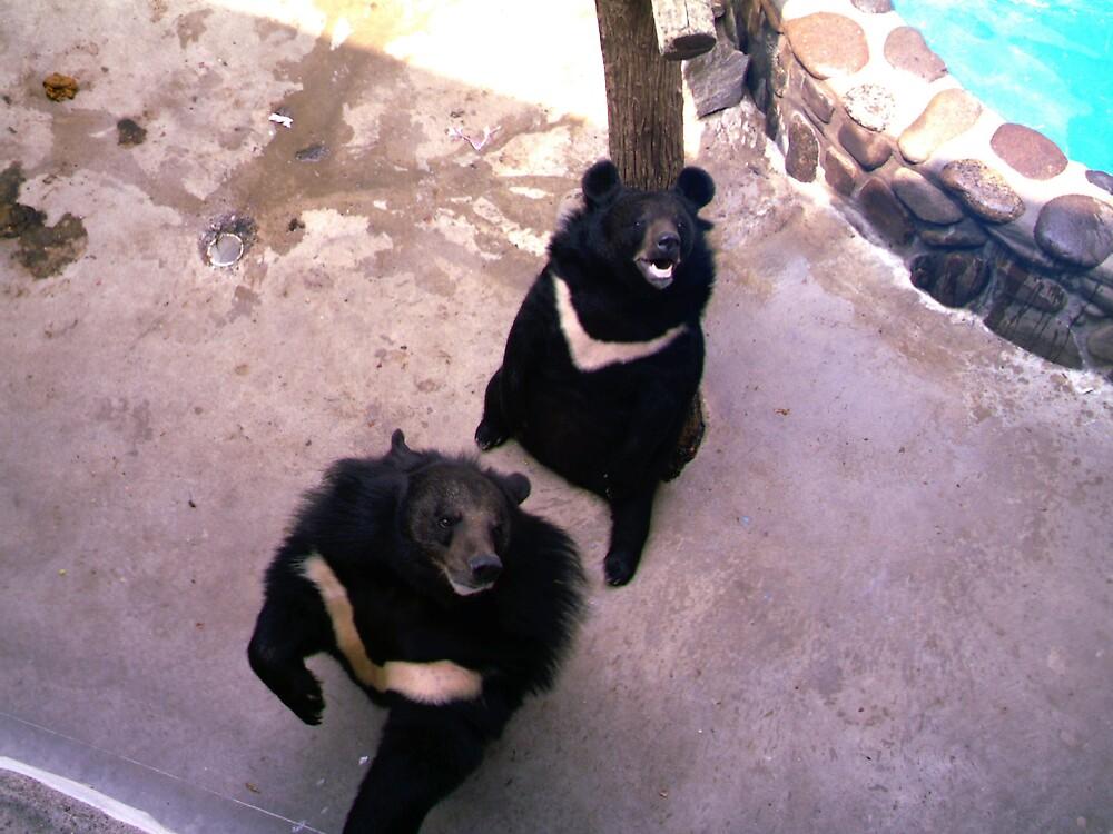 Bears! by volcomgrl17