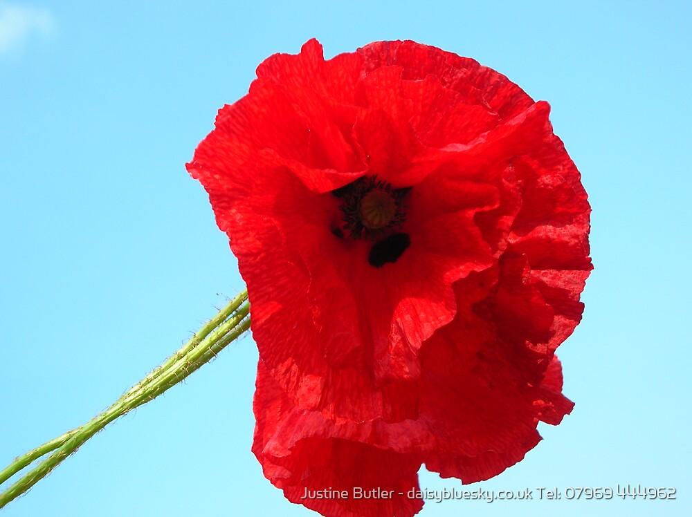 Poppy On Blue Sky by Justine Butler - daisybluesky.co.uk Tel: 07969 444962