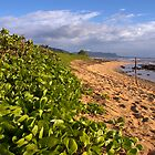 Kauai Beach by wyllys