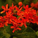 Fresh Red Flowers by tropicalsamuelv