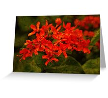 Fresh Red Flowers Greeting Card
