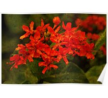 Fresh Red Flowers Poster