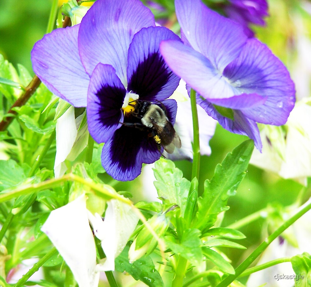 Pollination by djskastyle