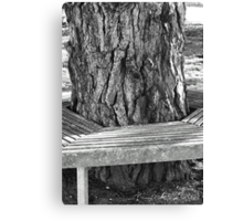 Pine tree and seat Canvas Print