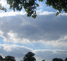 Clouds & Trees by Toni Ann
