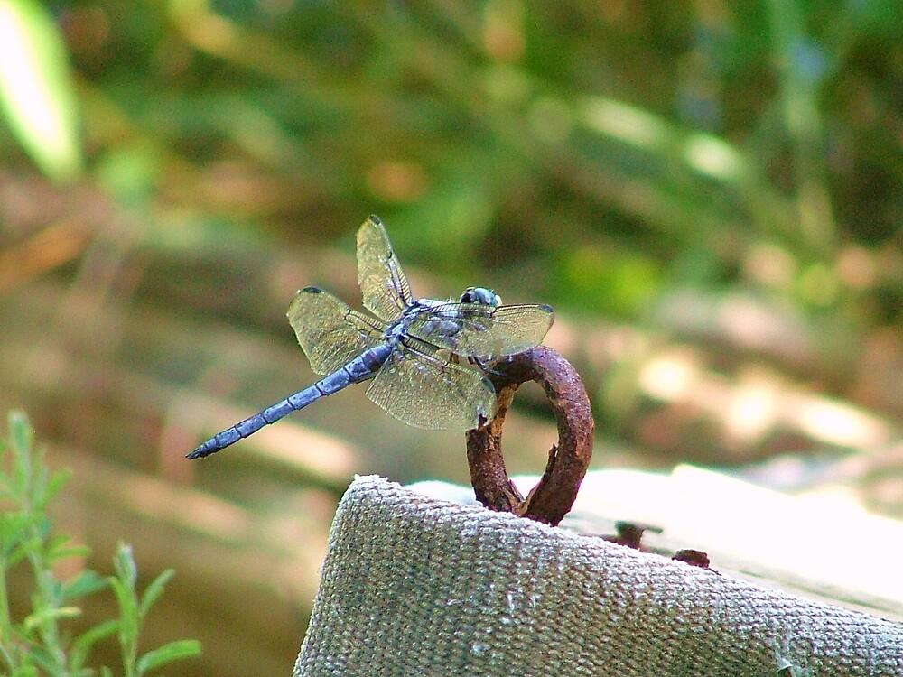 Summer Flies.... by smspaeth