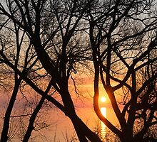 Sunrise Through the Chaos of Tree Branches by Georgia Mizuleva