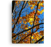 Sunny Orange Leaves with Branches Canvas Print