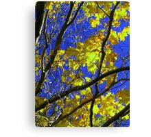 Sunny Yellow Leaves with Branches Canvas Print