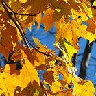 Orange Fall Leaves by Pamela Burger