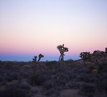 joshua tree by alban