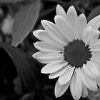 B/w Flower by Chase Cody