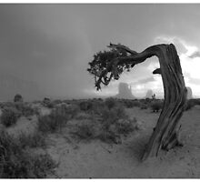 Navajo Land 1 by Jerzy Bergander