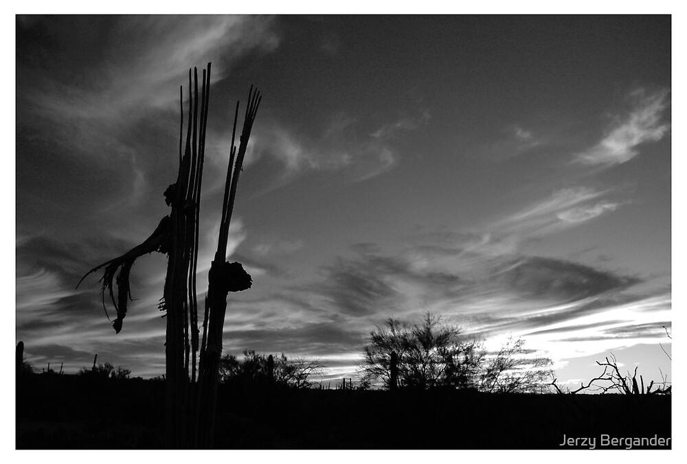 Desert 2 by Jerzy Bergander