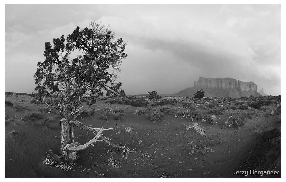 Navajo Land 2 by Jerzy Bergander