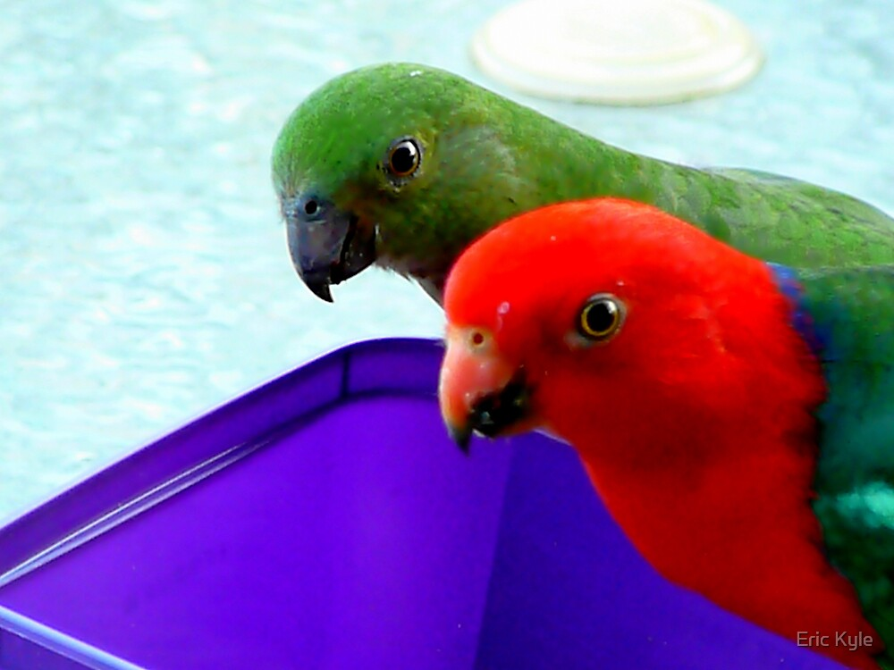 KING PARROTS by Eric Kyle