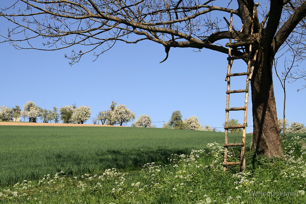 Ladder by Walter Quirtmair