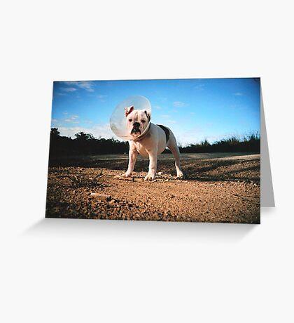 lulu Greeting Card