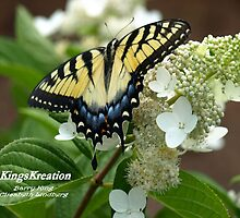 Yellow Tiger Swallowtail by KingsKreation