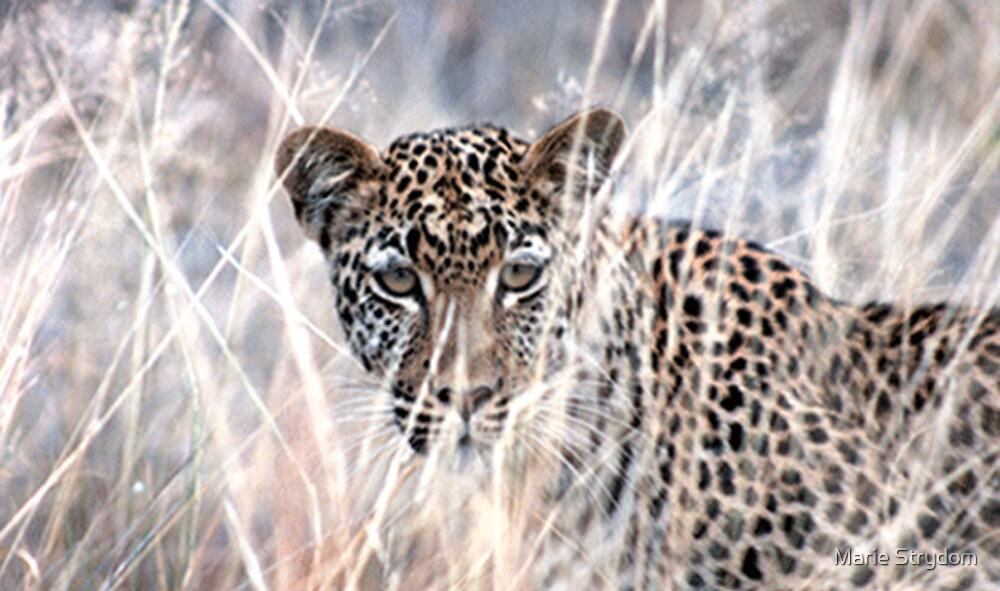 Silent Hunter by Marie Strydom