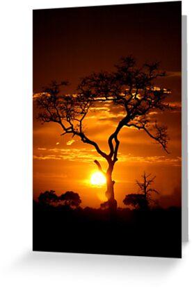 Satara Sunset by Marie Strydom