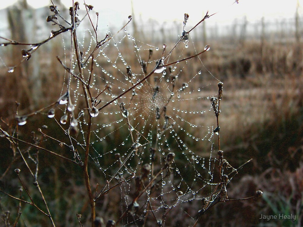 'The Web We Weave' by Jayne Healy