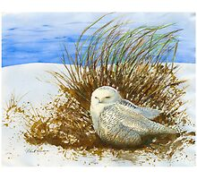 SNOWY OWL WINTER VISITOR by artsybob