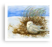 SNOWY OWL WINTER VISITOR Canvas Print