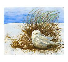SNOWY OWL WINTER VISITOR Photographic Print