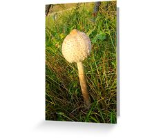 White Toadstool Greeting Card