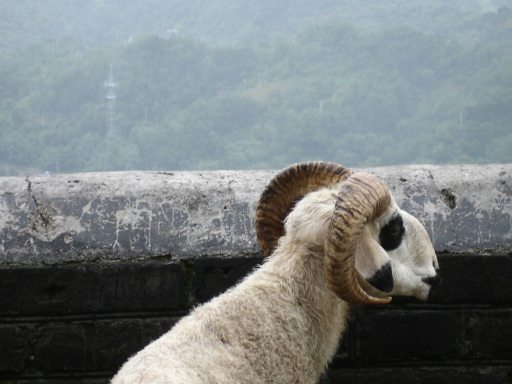 Goat admiring the Great Wall by williambarrow
