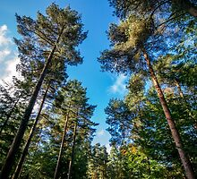 Autumn sunshine through the trees in Longleat Forest by Luke Farmer
