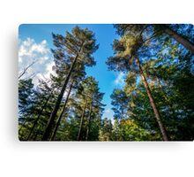 Autumn sunshine through the trees in Longleat Forest Canvas Print