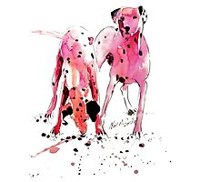 Pink Dalmations by Neil McBride Photographic Print