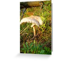 White Toadstool 2 Greeting Card