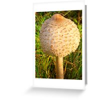 White Toadstool 4 Greeting Card