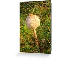 White Toadstool 5 Greeting Card